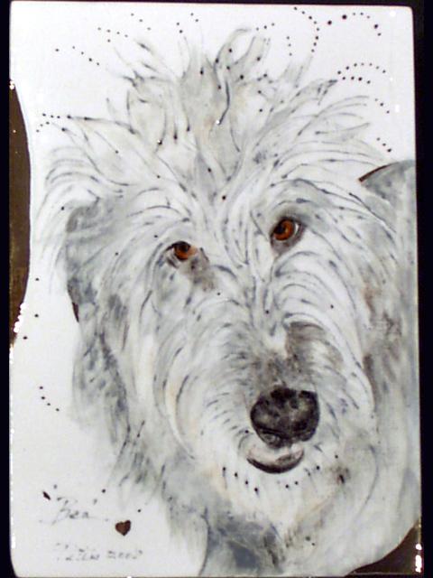 Bea | Irish Wolfhound